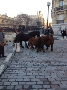 Perfectly normal to see tiny horses on cobbled streets.