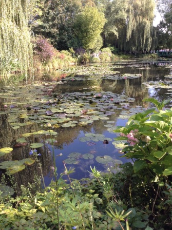 My photo of his water lillies