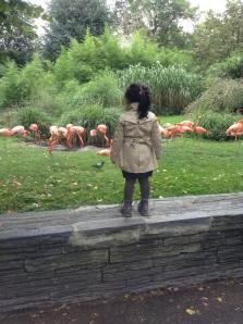 So cute! At Jardins des Plantes