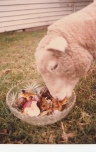 Fruit salad? Why yes I will. Lamby 1982