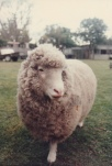 I think this is my best side? Lamby circa 1982