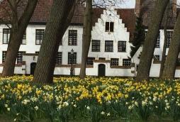 Crocus in Bruges Convent Gardens