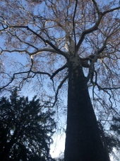Tree at Jardin des Plantes